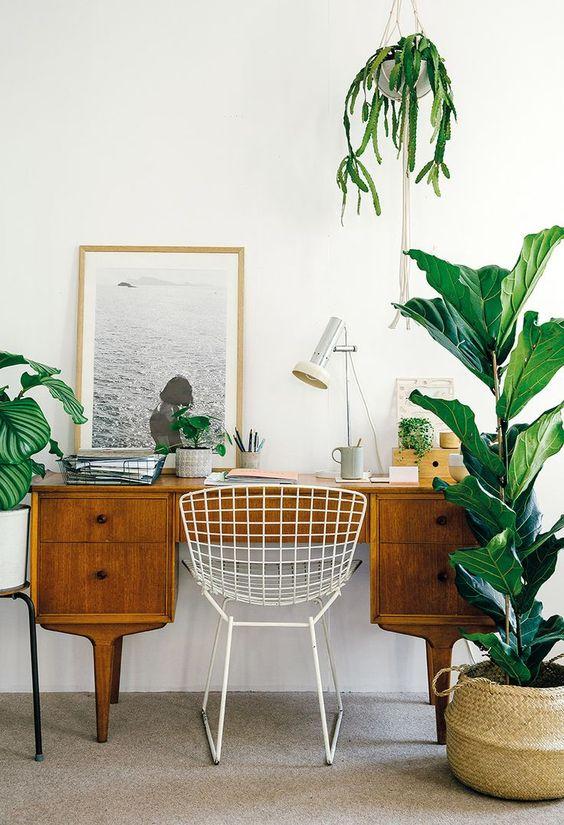 home office con plantas